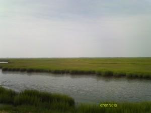 Wetlands with Wildwood on the horizon.
